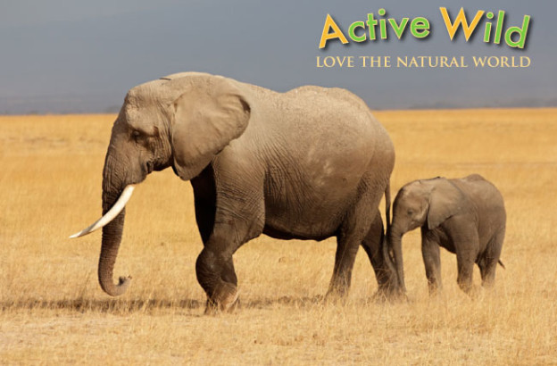 Active Wild Love The Natural World