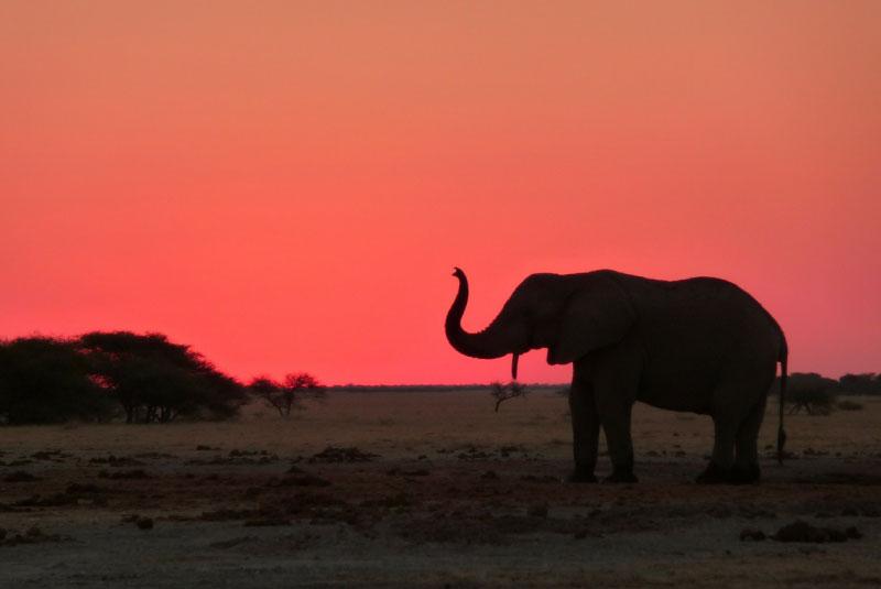Image result for elephant on sahara desert