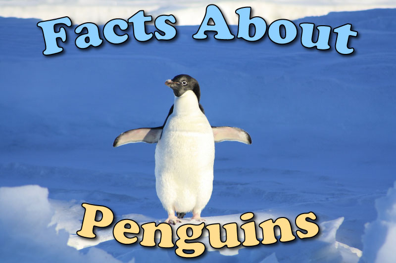 Facts About Penguins For Kids