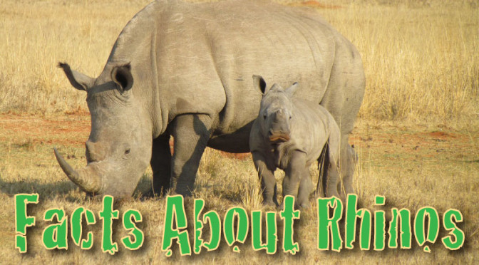Facts About Rhinos: Rhinoceros Information For Kids
