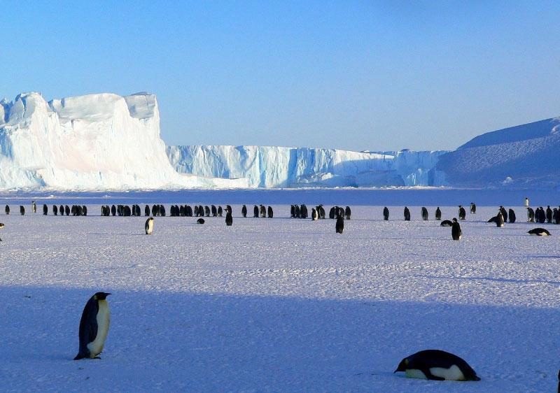 Emperor Penguin Breeding Grounds