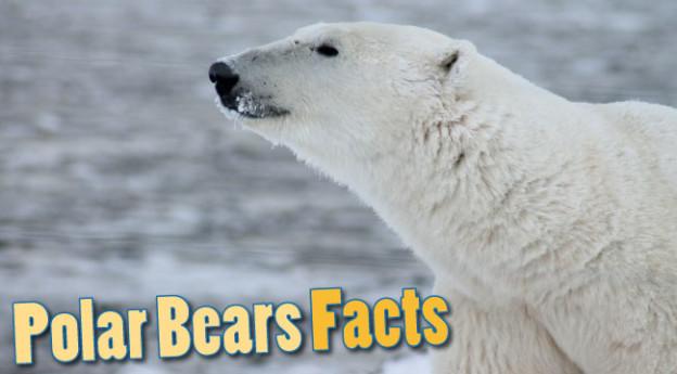 where do polar bears live for kids