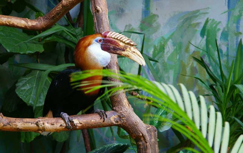 Toucan Information