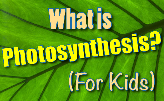 What Is Photosynthesis For Kids
