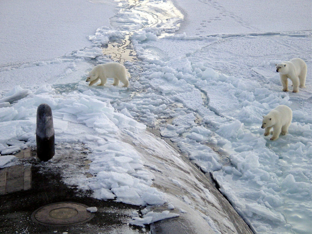 polar bear family investigate a submarine