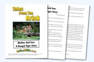 Endangered Animal Stories Bengal Tiger