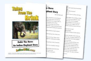 Endangered Animal Stories Indian Elephant