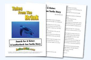 Endangered Animal Stories Leatherback Turtle