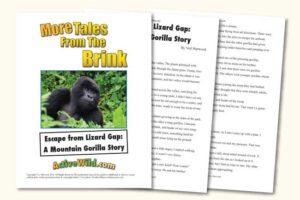 Endangered Animal Stories Mountain Gorilla