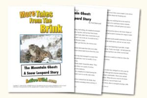 Endangered Animal Stories Snow Leopard