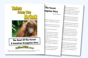 Endangered Animal Stories Sumatran Orangutan