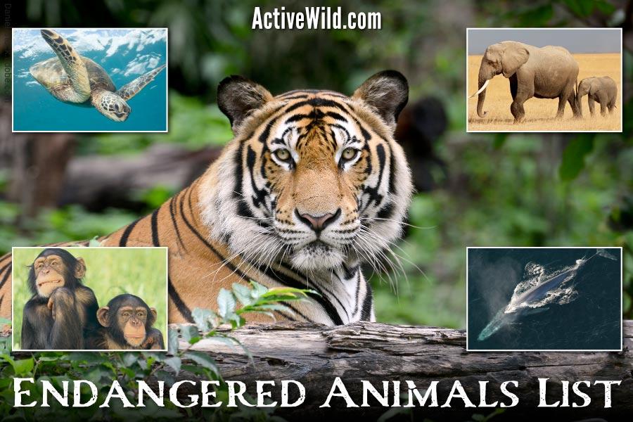 Endangered Animals List