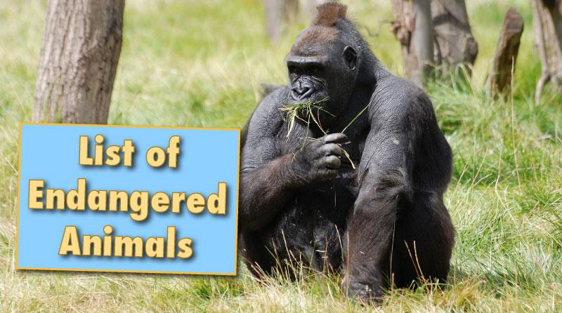 Terrestrial animals list