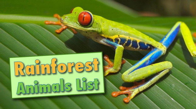 rainforest animals list with pictures facts information