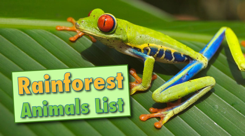 rainforest animals list with pictures facts information. Black Bedroom Furniture Sets. Home Design Ideas