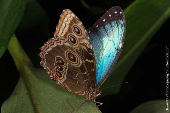 Rainforest Birds Flying Blue Morpho Butterfly ...