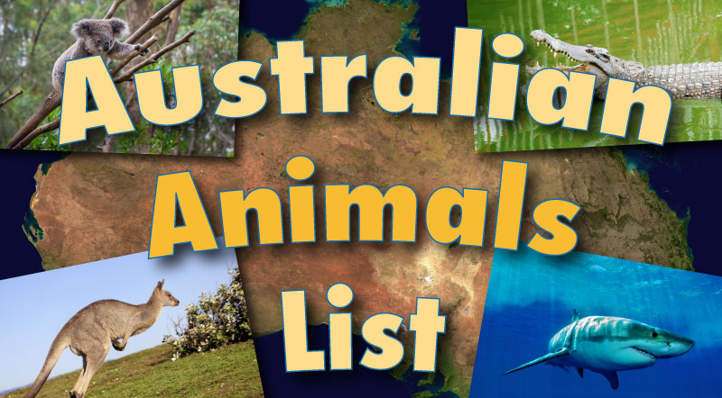 Australian Animals List