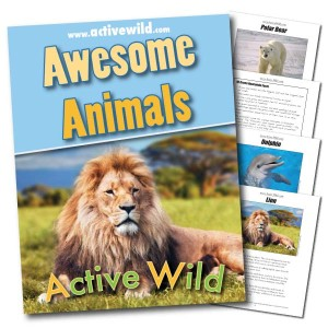 Awesome Animals eBook Cover