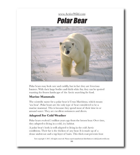 Free Awesome Animals Book For All Active Wild Readers