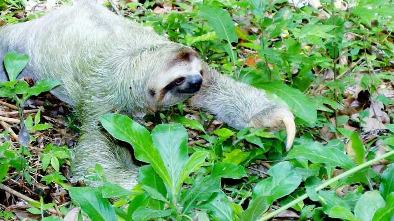 Sloth Information