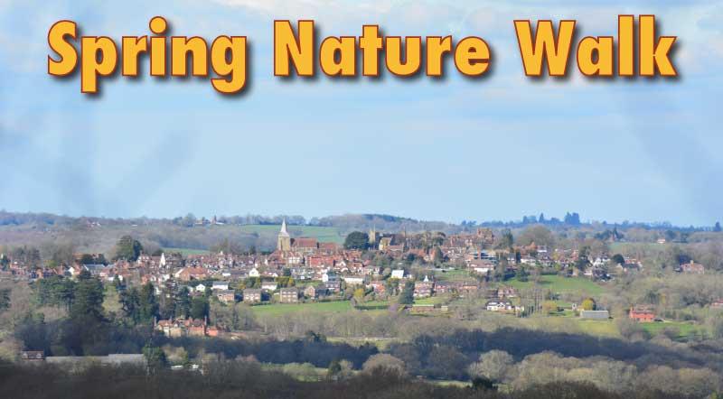 Spring Wildlife Walk Sussex England
