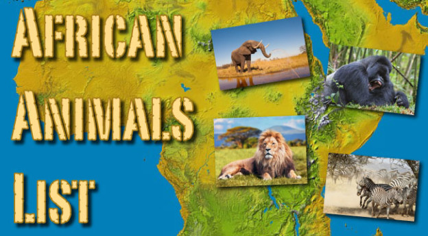 African Animals List