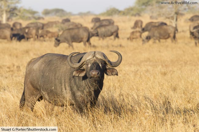 African Animals List With Pictures, Facts, Information & Worksheet