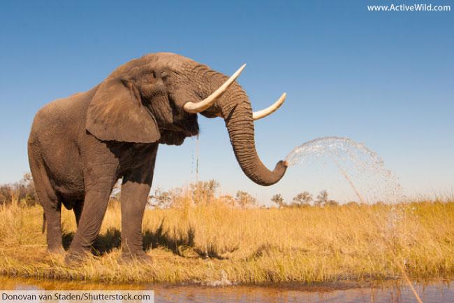 African jungle animals list