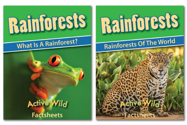 rainforest worksheets by active wild