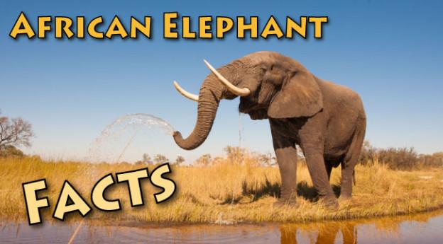 Elephant Habitat Facts For Kids