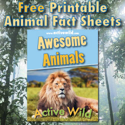 Free Printable Animal Fact Sheets PDF