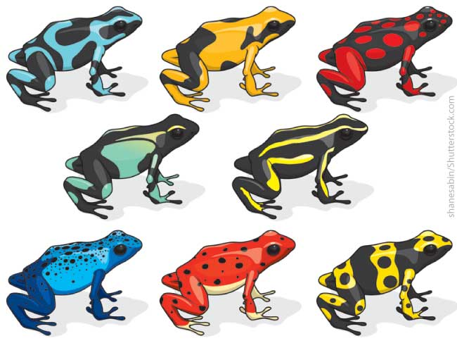 Poison Dart Frog Color Variations