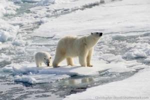 Online zoo: Polar Bear