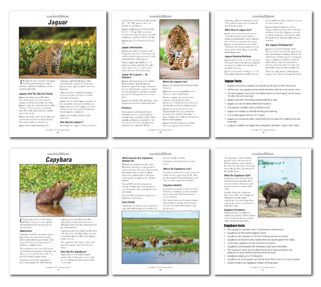 Rainforest Animals Printable Facts Pack from Active Wild