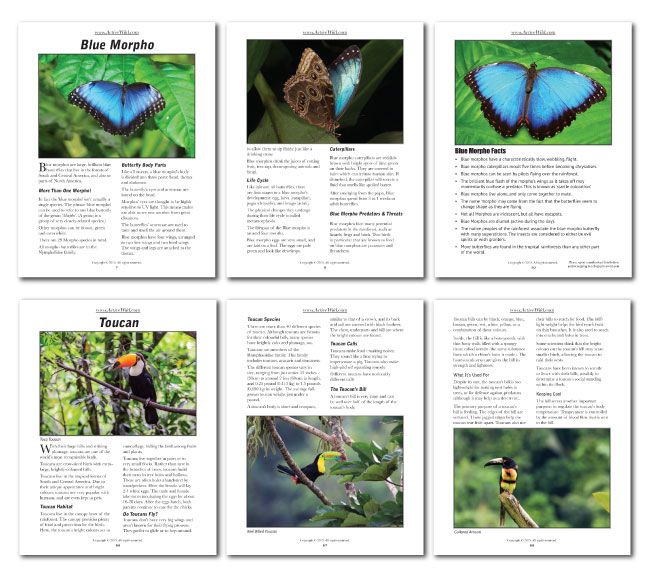 Rainforest Animals Facts Pack Pages 1