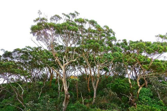 Gumtrees Sugar Glider Habitat
