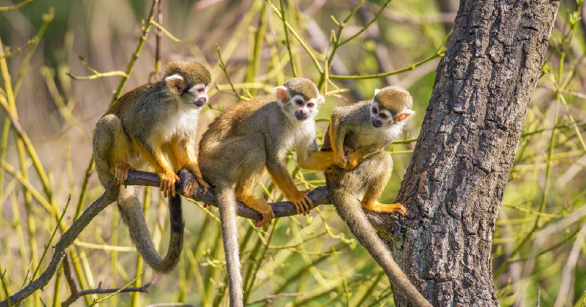 Amazon rainforest monkeys pictures facts information voltagebd Image collections