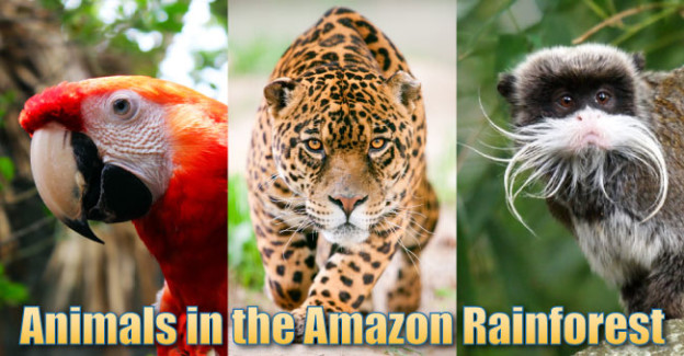 animals in the amazon rainforest pictures info facts