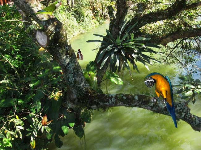 Blue macaw in the rainforest