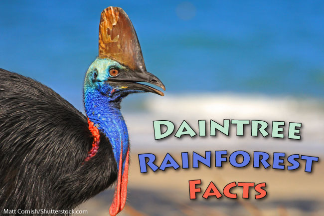 Daintree Rainforest Facts