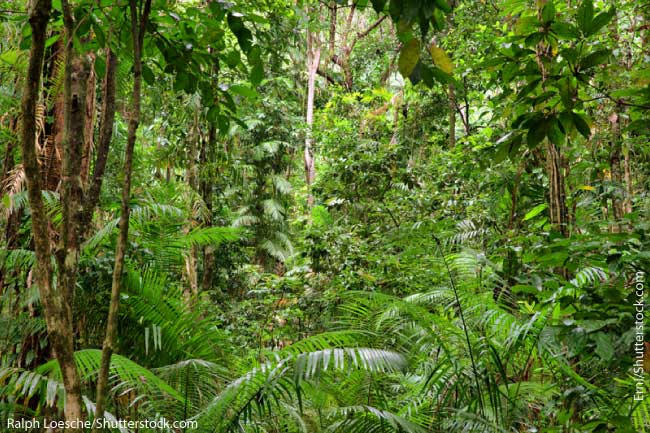 Daintree Rainforest Plants