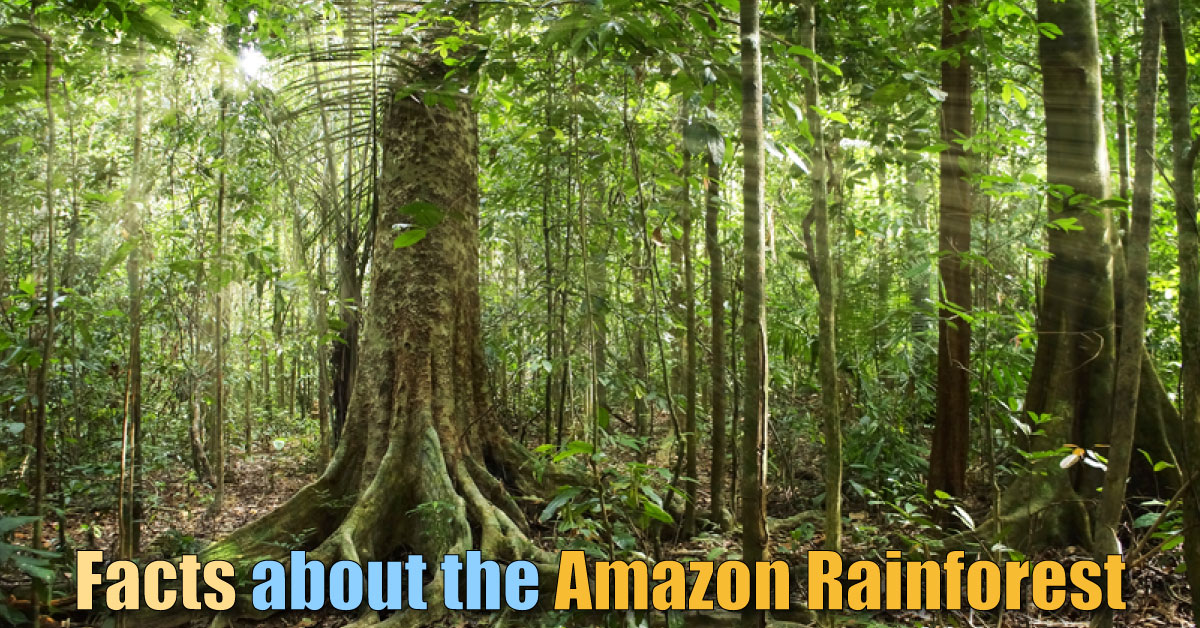 facts about the amazon rainforest the ultimate guide