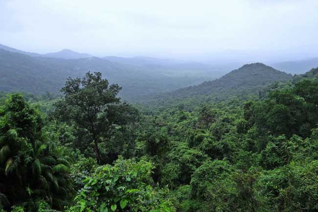 Indian Rainforest Mollem National Park