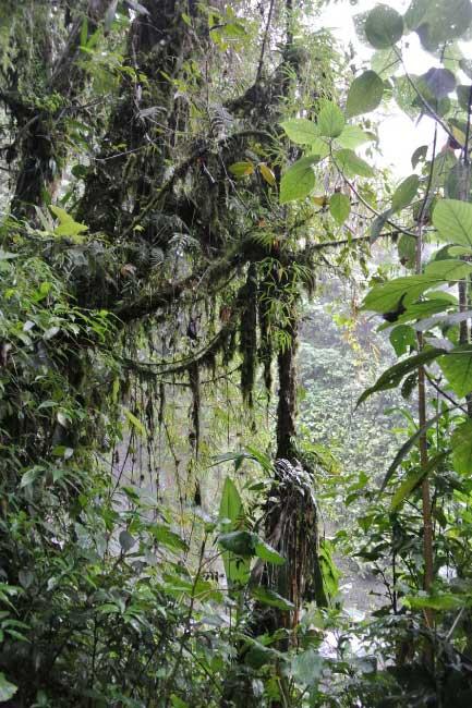 Lowland tropical rainforest