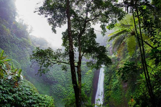http://www.activewild.com/wp-content/uploads/2015/11/Rainforest.jpg