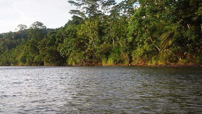 The Amazon River, the world's second longest river.