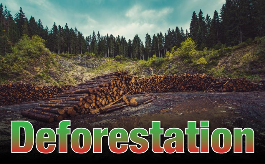 What Is Deforestation For Kids
