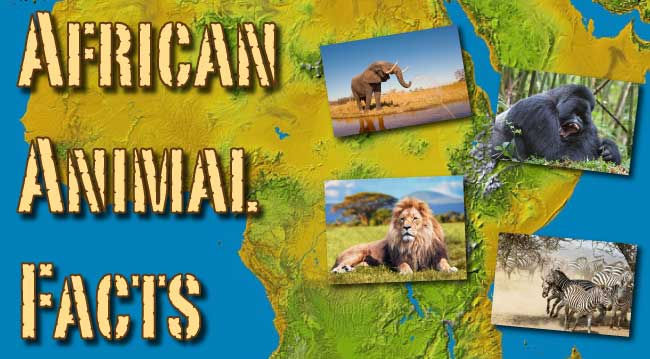African Animal Facts