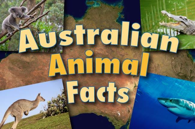 Australian Animal Facts