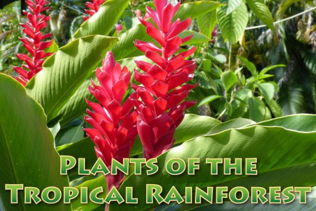 Plants In The Tropical Rainforest